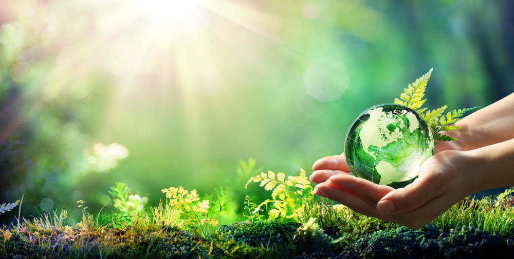 consultation environmental principles